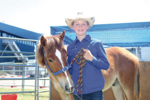 An 11-year-old Pakenham Upper horse lover Matilda De Haan has transformed a high country Brumby