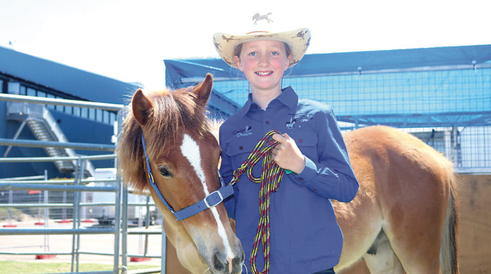An 11-year-old Pakenham Upper horse lover Matilda De Haan has transformed a high country Brumby