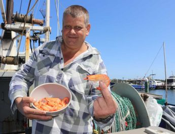 Lakes Entrance prawns