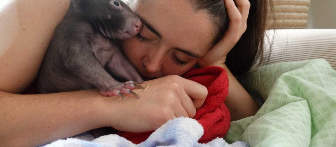 Wombat Magic a special haven